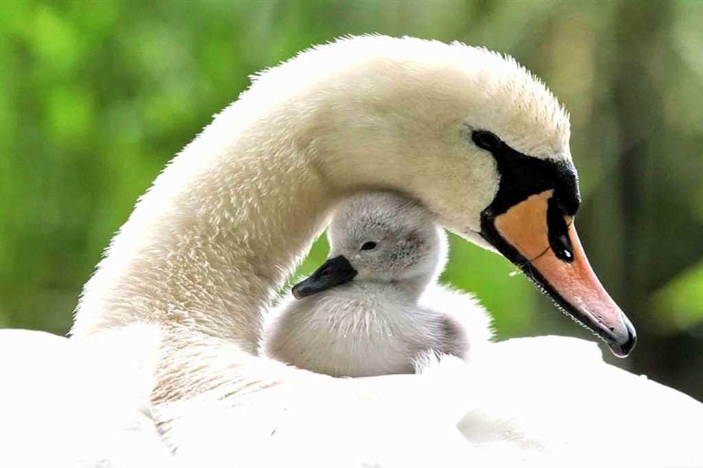 35 Frasi Da Dedicare Alla Mamma Tratte Da Canzoni