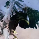 Falco a metà (Gianluca Grignani)